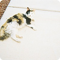 Adopt A Pet :: RUFI - Mesa, AZ