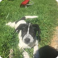 Adopt A Pet :: Diana- Illinois - Wood Dale, IL