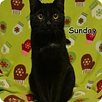 Adopt A Pet :: Sunday - Oyster Bay, NY