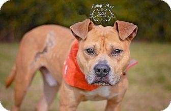 Shepherd (Unknown Type)/Terrier (Unknown Type, Medium) Mix Dog for adoption in Fort Valley, Georgia - Amos