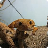 Adopt A Pet :: Kiwi - Quilcene, WA