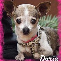 Adopt A Pet :: Daria - Anaheim Hills, CA