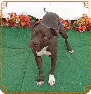 Boxer Mix Dog for adoption in Marietta, Georgia - CHULA