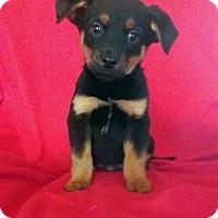 Adopt A Pet :: Laverne - Adoption Pending! - Hillsboro, IL