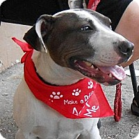 Bull Terrier Mix Dog for adoption in New Orleans, Louisiana - Skye