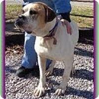 Adopt A Pet :: Cuddles - Staunton, VA