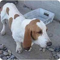 Adopt A Pet :: Kenny - Albuquerque, NM