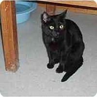 Adopt A Pet :: Tinkerbelle - Hamburg, NY