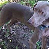 Adopt A Pet :: Bunker  **ADOPTED** - Eustis, FL