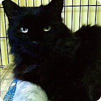 Adopt A Pet :: Sully - Medway, MA