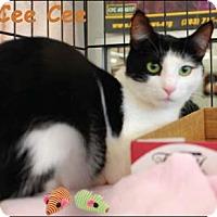 Adopt A Pet :: Cee Cee - Merrifield, VA