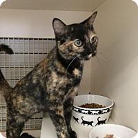 Adopt A Pet :: Trixie - Stafford, VA