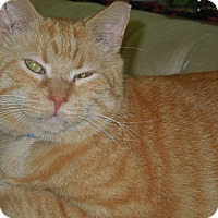 Adopt A Pet :: Marlin - Medina, OH