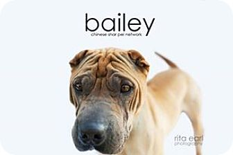 Shar Pei Dog for adoption in Mira Loma, California - Bailey - pending