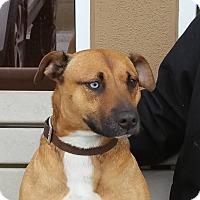 Adopt A Pet :: KASH - Gustine, CA