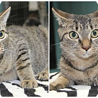 Adopt A Pet :: Cooper - Forked River, NJ