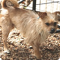 Terrier (Unknown Type, Small) Mix Dog for adoption in Allentown, Pennsylvania - Baxter