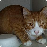 Adopt A Pet :: Walter - Hamburg, NY