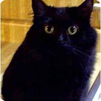 Adopt A Pet :: Marley - Lilburn, GA