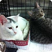 Adopt A Pet :: Ernie - Pittstown, NJ