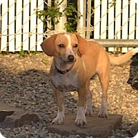 Adopt A Pet :: Willow- in CT - West Hartford, CT