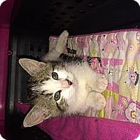 Adopt A Pet :: St Nick - Clay, NY