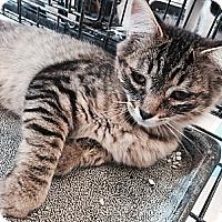 Adopt A Pet :: Baxter - Santa Monica, CA