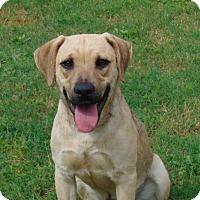 Adopt A Pet :: Hummer - Lufkin, TX