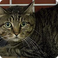 Adopt A Pet :: FANNETTE - Houston, TX