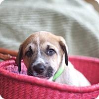 Adopt A Pet :: Crpgotram - Evergreen, CO
