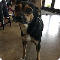Adopt A Pet :: Delilah - Hartford, CT