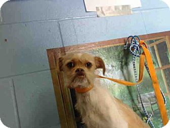Terrier (Unknown Type, Small) Mix Dog for adoption in San Bernardino, California - URGENT ON 4/8  San Bernardino