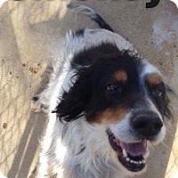 Adopt A Pet :: Smokey - Newport, KY