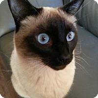 Adopt A Pet :: Sookie - Encinitas, CA