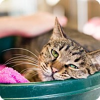 Adopt A Pet :: Galaxy - Palm Springs, CA