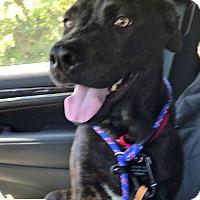 Adopt A Pet :: Onyx - Baltimore, MD