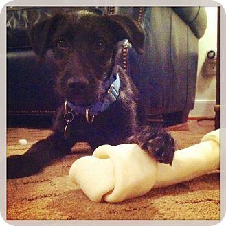 Terrier (Unknown Type, Medium) Mix Puppy for adoption in Richmond, Virginia - Jetta