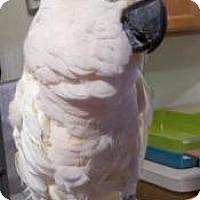 Adopt A Pet :: Molly 2 - Northbrook, IL