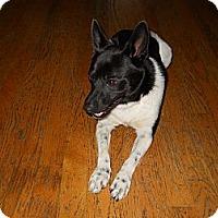 Adopt A Pet :: Skip - Charlotte, NC