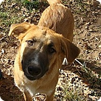 Adopt A Pet :: COURTESY POST-ASIA - West Hartford, CT