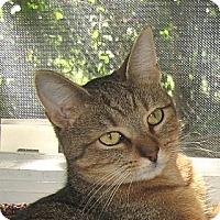 Adopt A Pet :: TIGER - 2013 - Hamilton, NJ