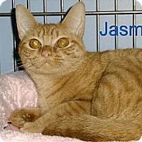 Adopt A Pet :: Jasmine - Medway, MA