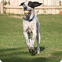 Adopt A Pet :: Cosmo - Homewood, AL