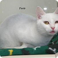 Adopt A Pet :: Torie - Dover, OH