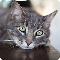 Adopt A Pet :: Brody - Chicago, IL