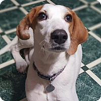 Adopt A Pet :: Lila - Marietta, GA
