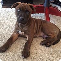 Adopt A Pet :: Walker - Marietta, GA