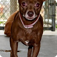 Adopt A Pet :: Hershey - Erwin, TN