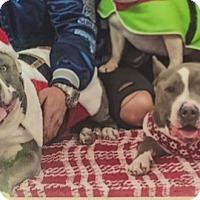 Adopt A Pet :: Karma&Enzo-URGENT - Burbank, CA