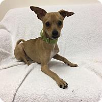 Adopt A Pet :: Atreyu - Mission Viejo, CA